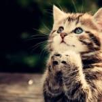 cats animals praying_www.animalhi.com_97