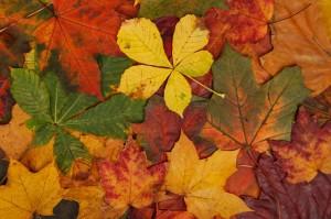 colorful_autumn_leaves_192301